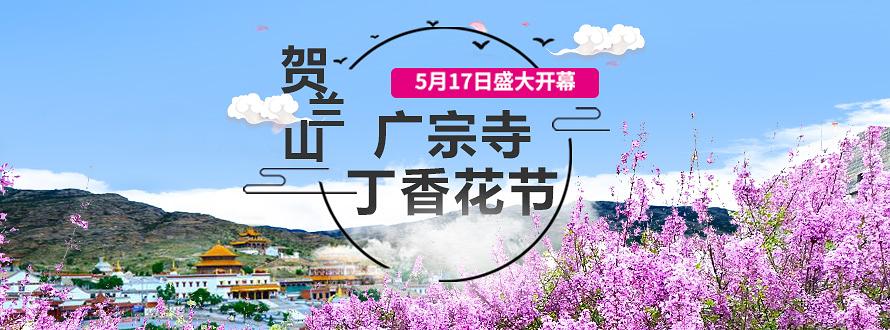 贺兰山广宗寺(南寺)丁香花节