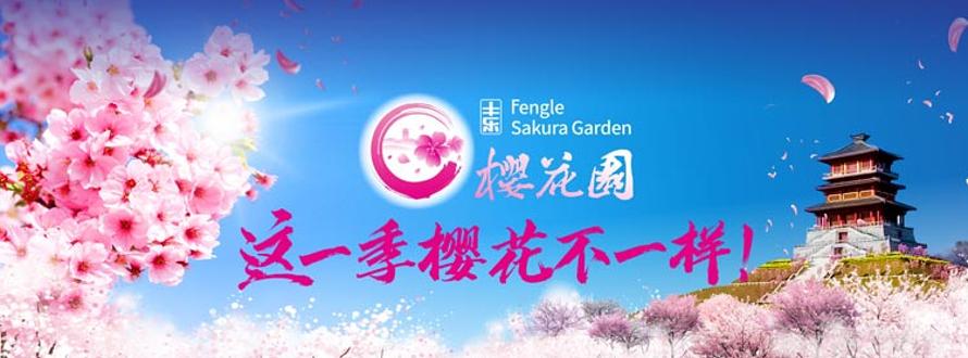 丰乐樱花园这一季樱花不一样