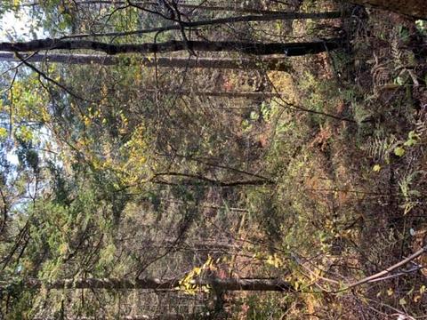 火山口地下森林旅游景点图片