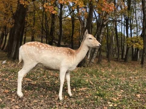 平山神鹿旅游区旅游景点图片