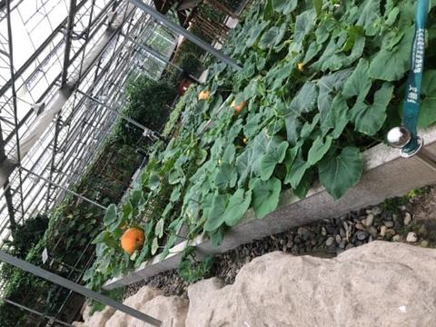 太仓现代农业园旅游景点图片