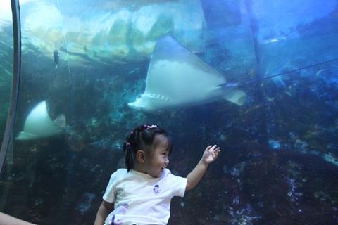 小梅沙海洋世界旅游景点攻略图