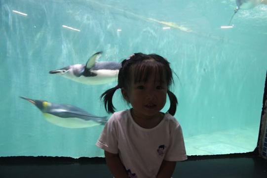 小梅沙海洋世界旅游景点图片