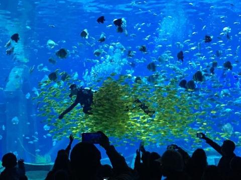 昆明融创海世界旅游景点图片