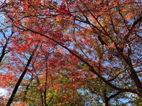 天桥沟森林公园旅游景点图片
