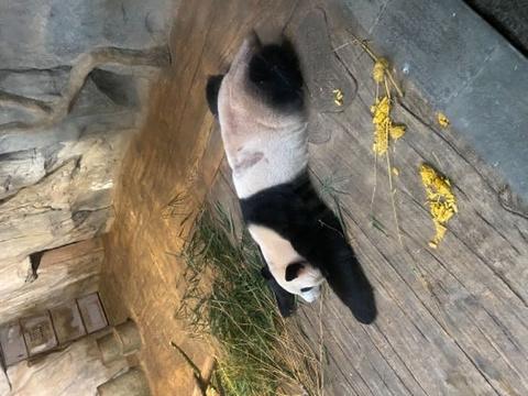 深圳野生动物园旅游景点图片
