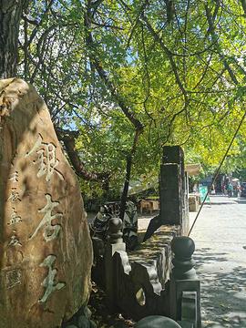 银杏村旅游景点攻略图