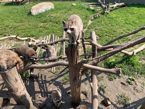 龙沙动植物园旅游景点图片