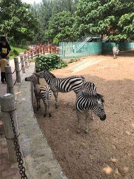 东北庄野生动物园旅游景点攻略图