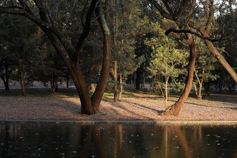 共青国家森林公园旅游景点攻略图